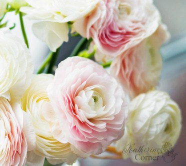 pink and white ranunculus katherines corner