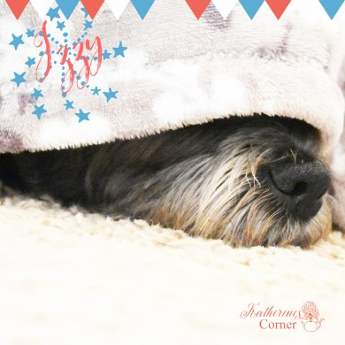 caring for your dog at the 4th of july