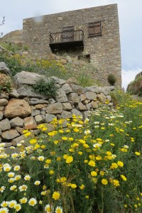 Spring flowers on the island of Spinalonga off the coast near Elounda