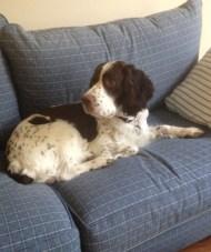 Pete on sofa