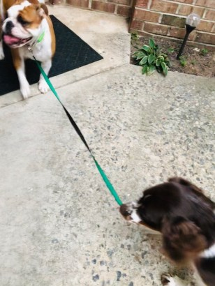 Maggie walking Sweet Pea
