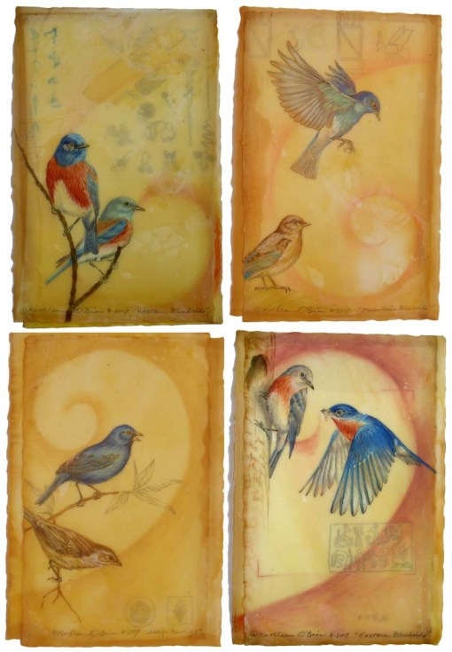 Bluebird Card Set 8