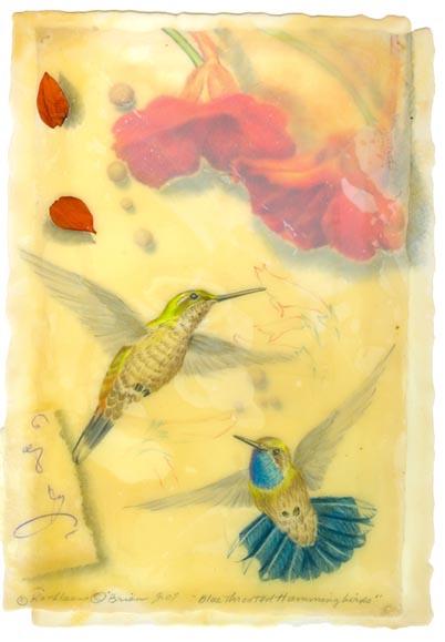 Blue Throated Hummingbirds, Giclee print