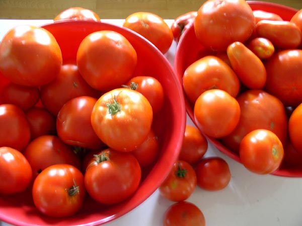Secrets; More and more tomatoes to can