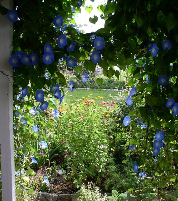 Making Flower Essences Begins August 7