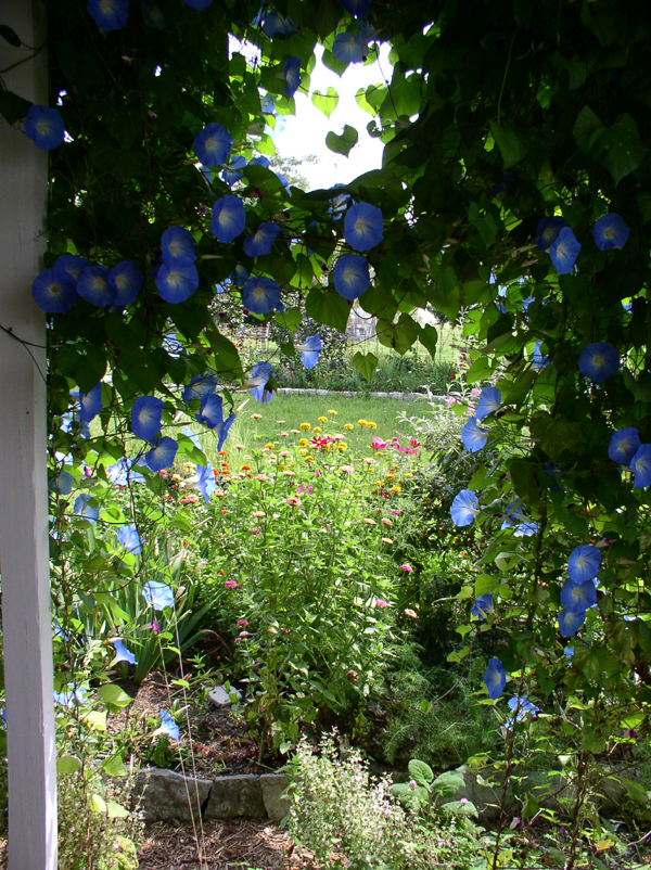 Inside the Sunwise Porch, Deep Morning Glory Shade