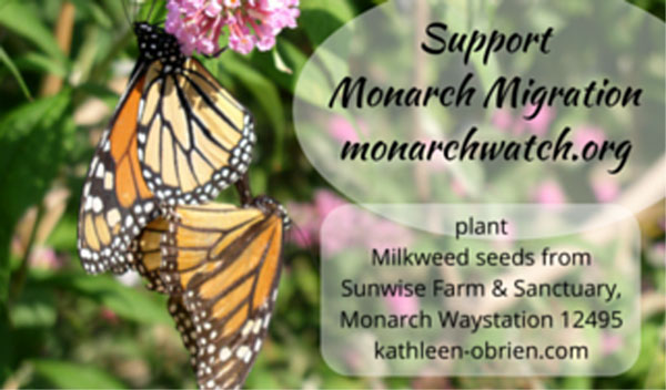 Mating Monarchs for Sunwise Farm & Sanctuary Milkweed Seeds Label, get' em while you can...
