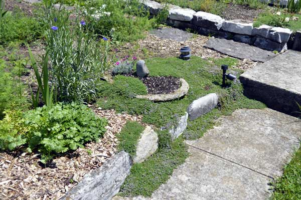 """Thymus Minus"" along the entry walk"