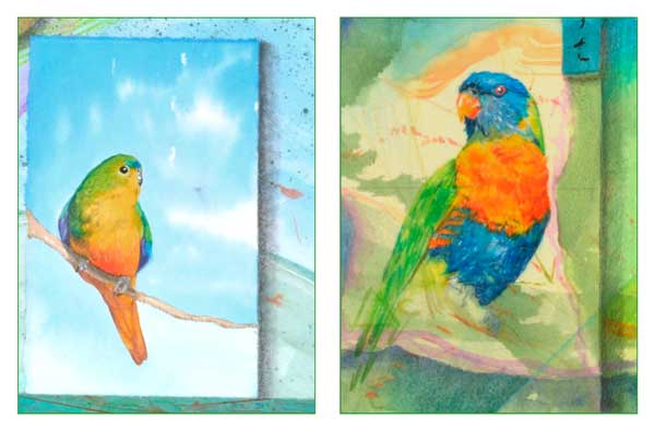 Orange Bellied Parrot and Rainbow Parrot details of watercolor collage by ©Kathleen O'Brien