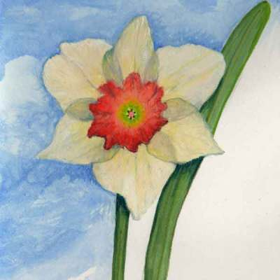 First Daffodil,©Kathleen O'Brien