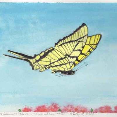 Sunwise Swallowtail, ©Kathleen O'Brien