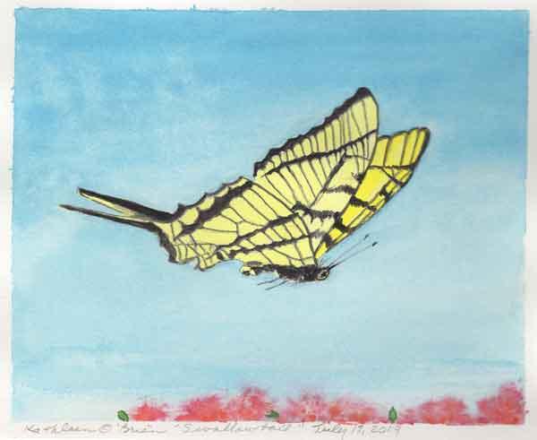 14 Sunwise Swallowtail, ©Kathleen O'Brien