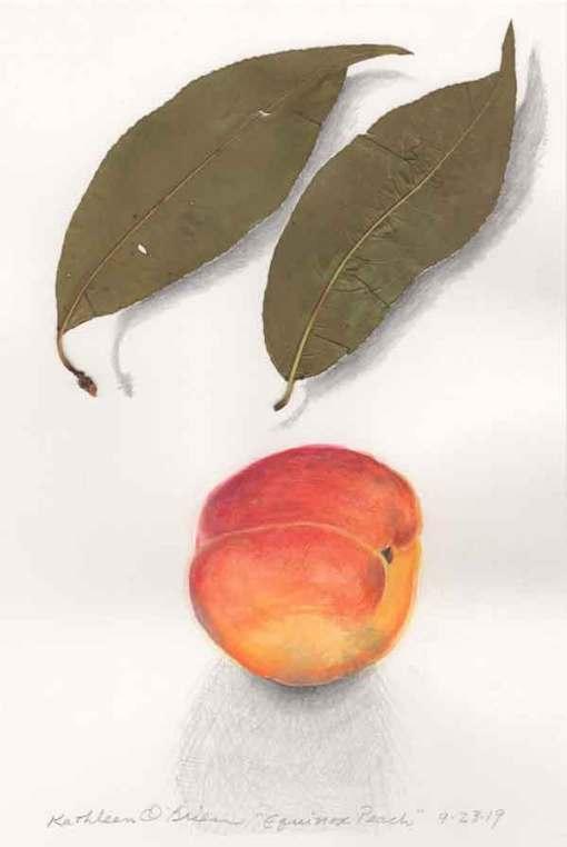 Equinox Peach, ©Kathleen O'Brien