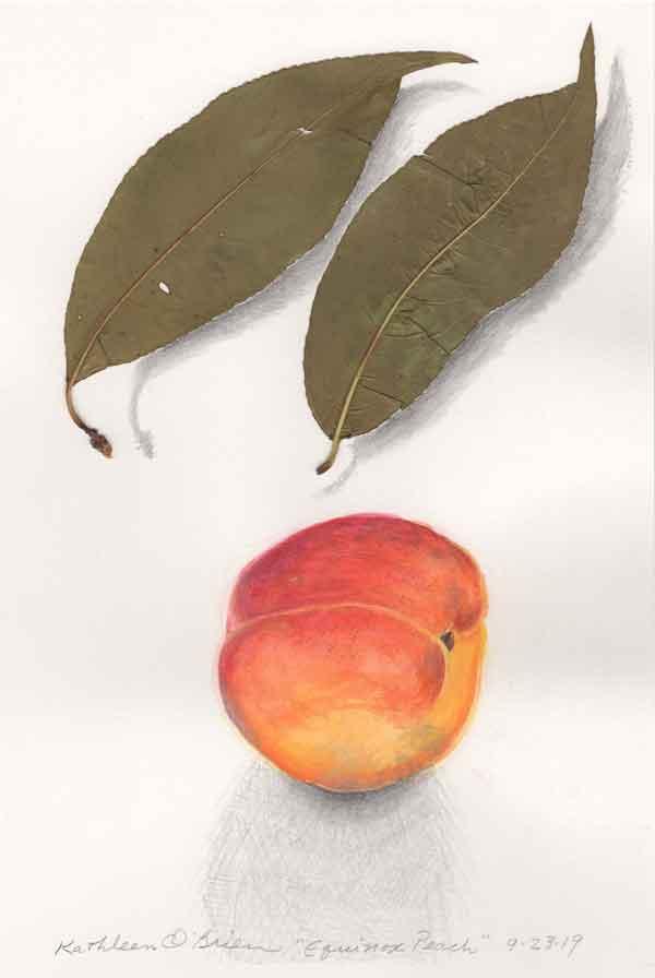 7 Equinox Peach, ©Kathleen O'Brien