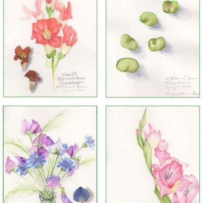 Garden Card set 1