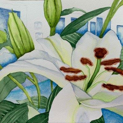 "©Kathleen O'Brien, 12 Madonna Lilies11, 8x8"""