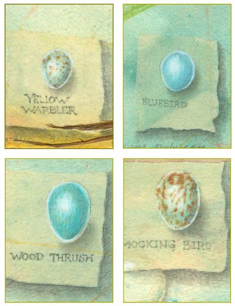 Bird Eggs Set 1, Wood thrush, Yellow Warbler, Mockingbird, Bluebird