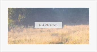Read More PURPOSE articles