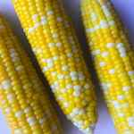 Instant Pot Corn on the Cob is a simple and easy way to cook up this summer staple. Just a 2 minute cook time and your corn is ready to be slathered in butter and enjoyed.