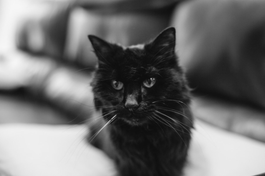 Saying Goodbye and Sharing Summer Expections - Our Cat Leigha