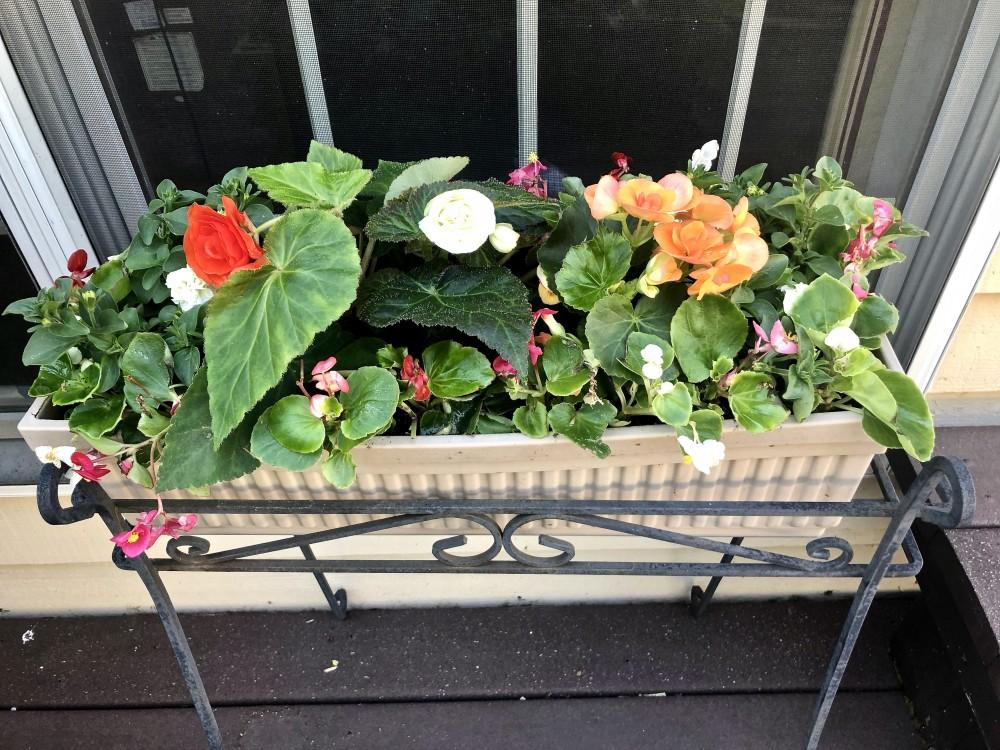 Box planter featuring begonias.