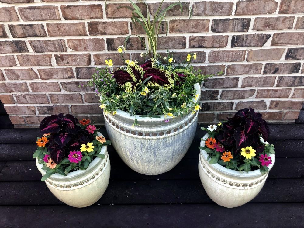 Three flowering planters featuring coleus and zinnias.
