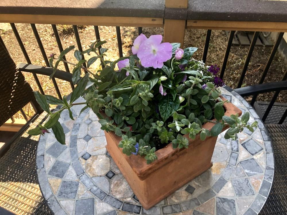 Flowering planter featuring purple impatiens.