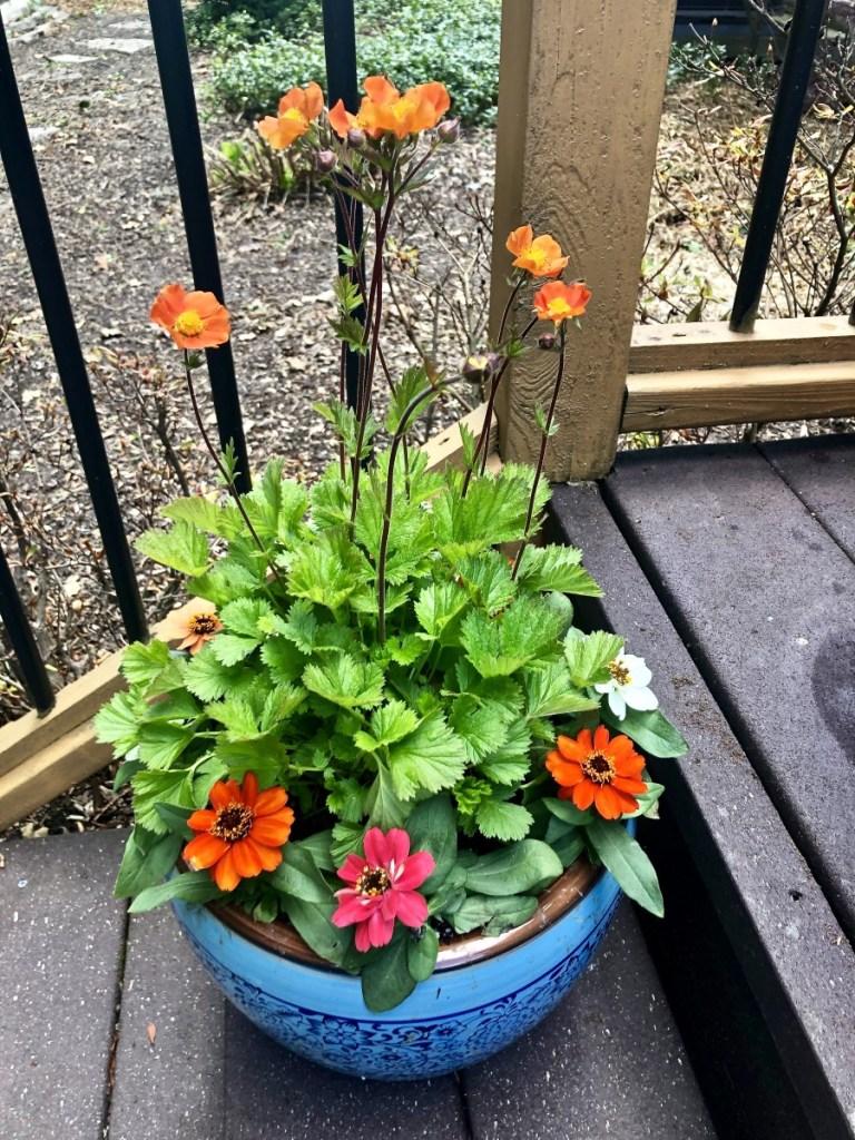 Flowering planter featuring zinnias.