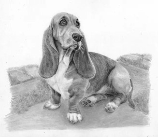 Basset, graphite sketch, Kathrin Guenther, web file