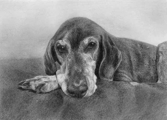 Pointer drawing by Kathrin Guenther, graphite art, pet art
