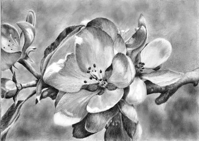 tree blossom, graphite, drawing, Kathrin Guenther, web file