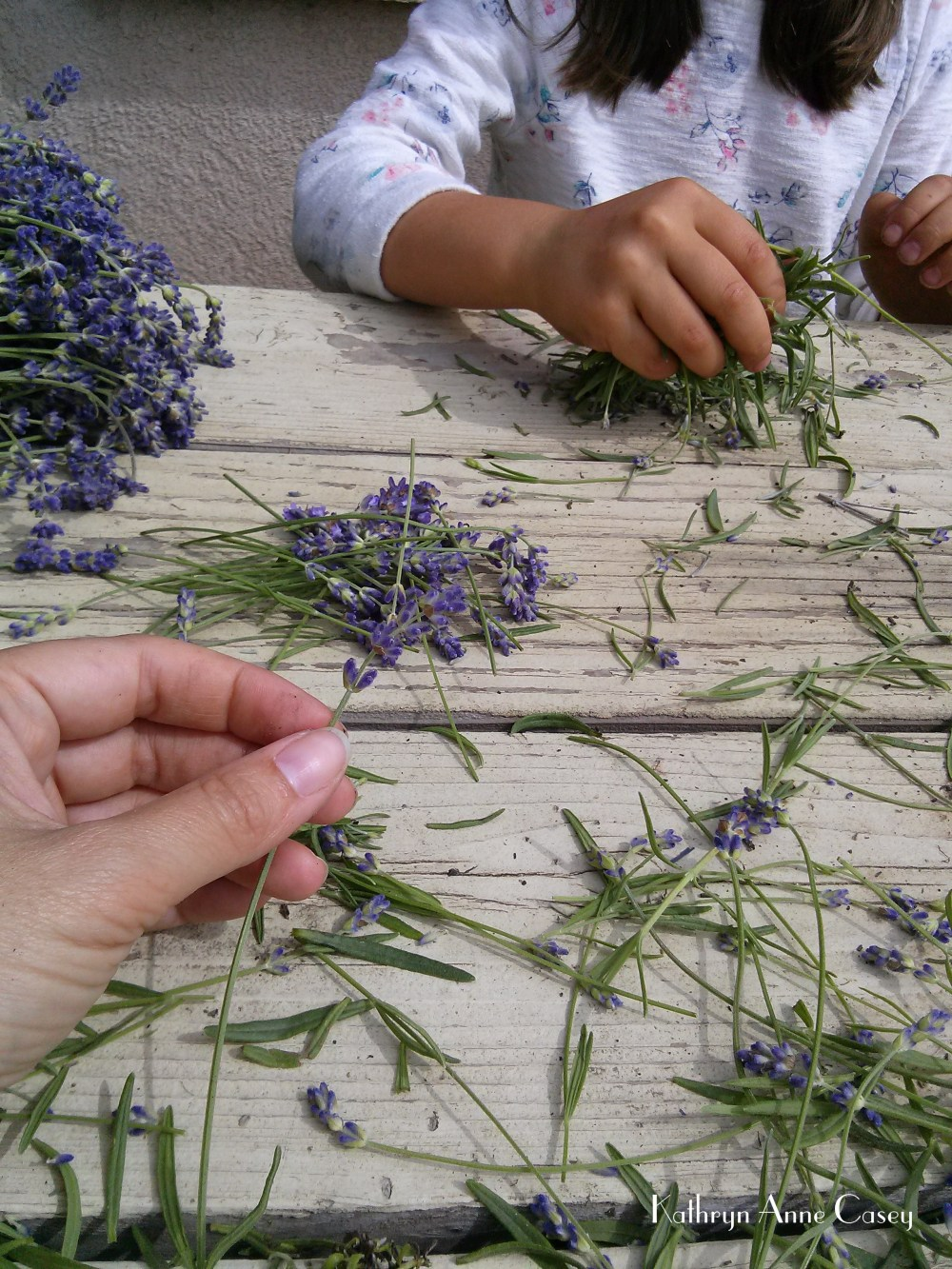 Mother and daughter separating lavender buds from stalks