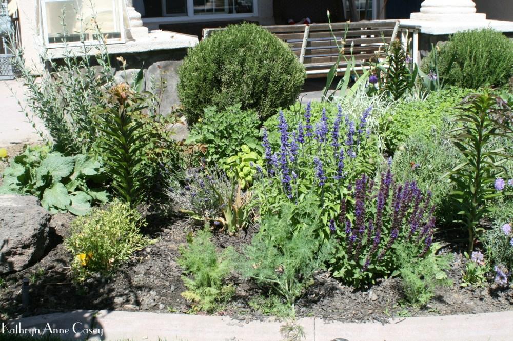 photo of suburban herb garden