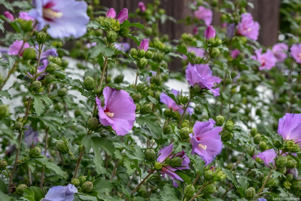 summer flowers close up