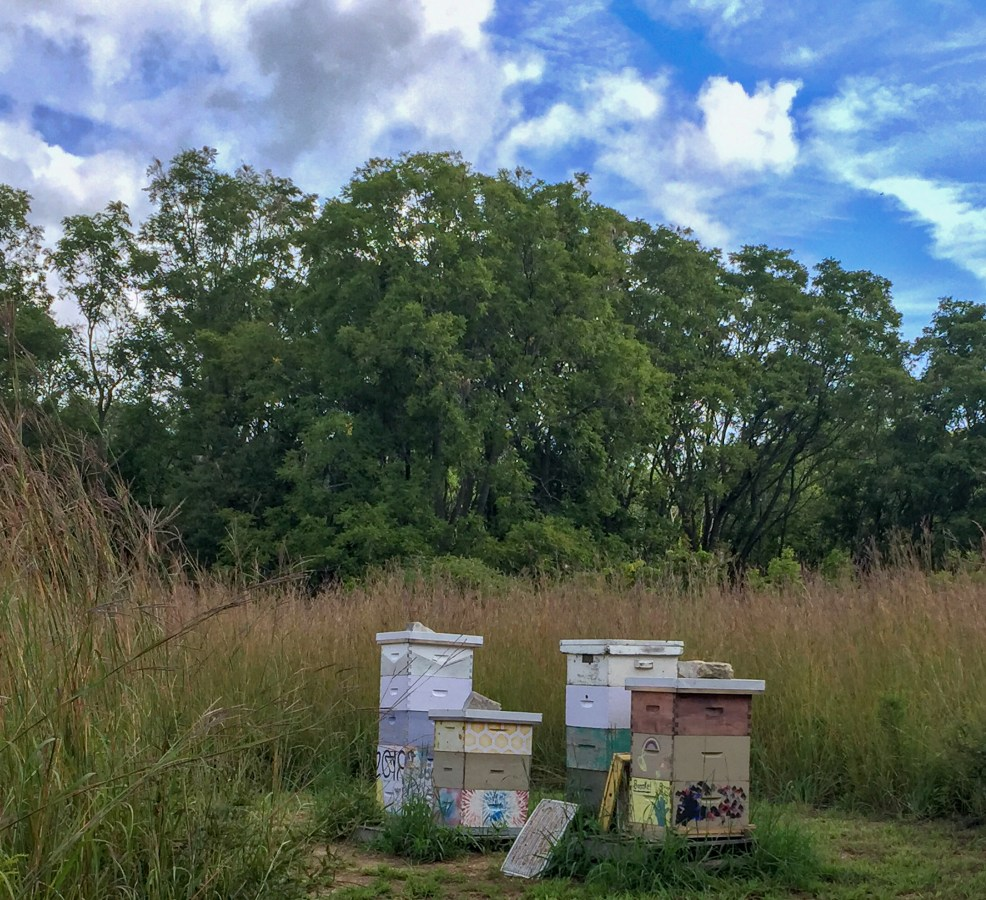 apiary at long point eco adventures