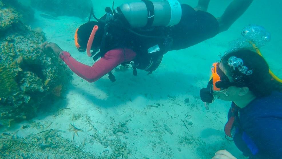 Top 5 Reasons to try SNUBA #diving #Scuba #dive #Sea #snorkeling #scubadive #SNUBA #snubalife #trysnuba #whyyoushouldtrysnuba #BeachesMoms #top5reasons #beachesturksandcaicos #sarapittard