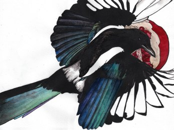"""""""Magpie"""" cover print"""