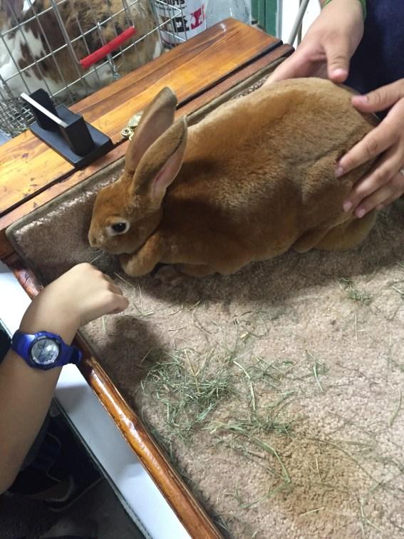Joy the rabbit.