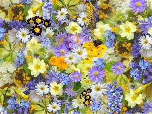 spring-flowers-110671_1920