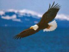 SOAR LIKE AN EAGLE INTO FREEDOM