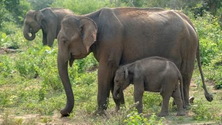 elephant8small