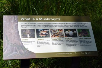 What is a Mushroom sign