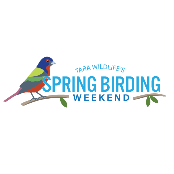 Spring Birding Weekend Logo Design