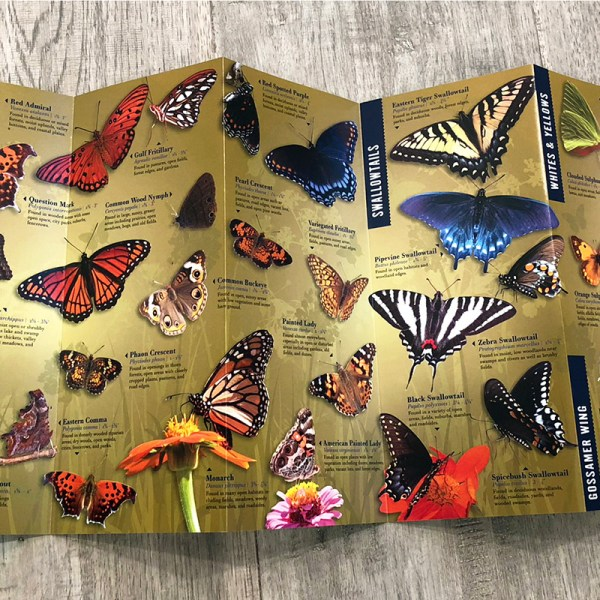 Butterflies of the Mississippi Delta Brochure