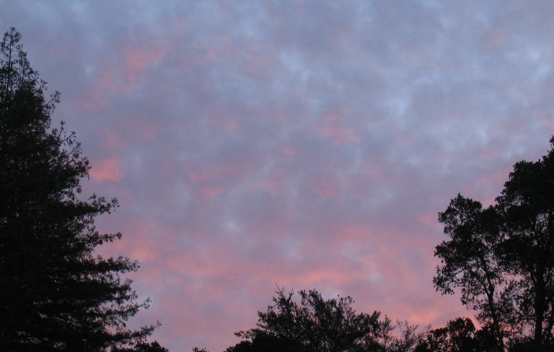 Blushing Dawn (photo: Kathy Loh)