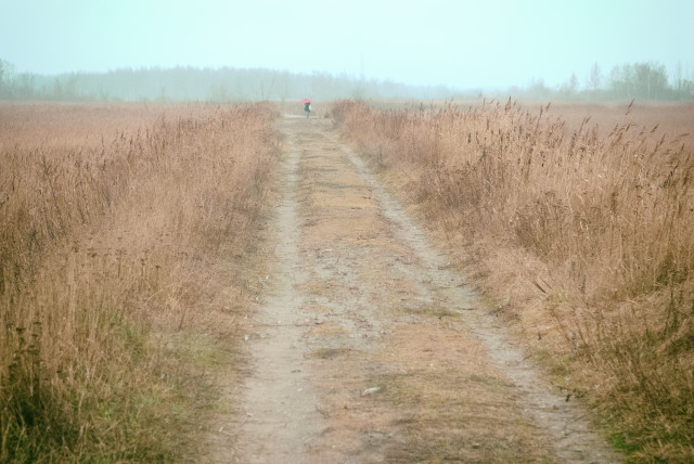 Reeds in a field