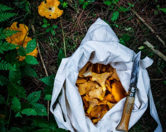 Foraging // Chanterelle and Corn Tacos with Chile Crema