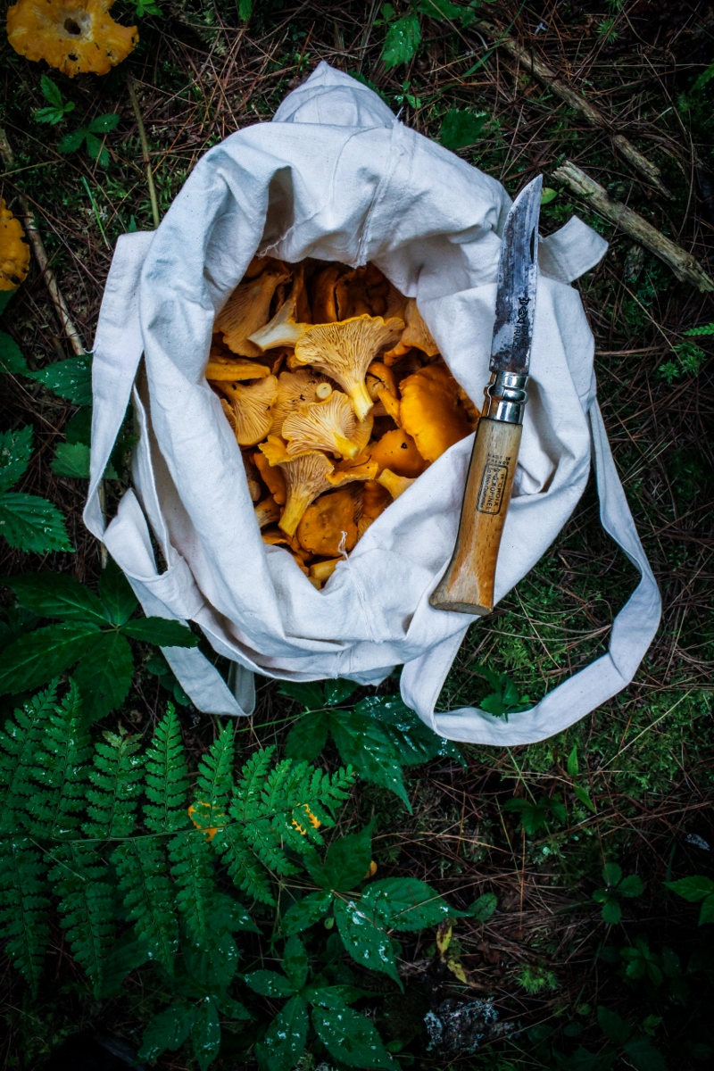 Foraging for Chanterelles {Katie at the Kitchen Door}