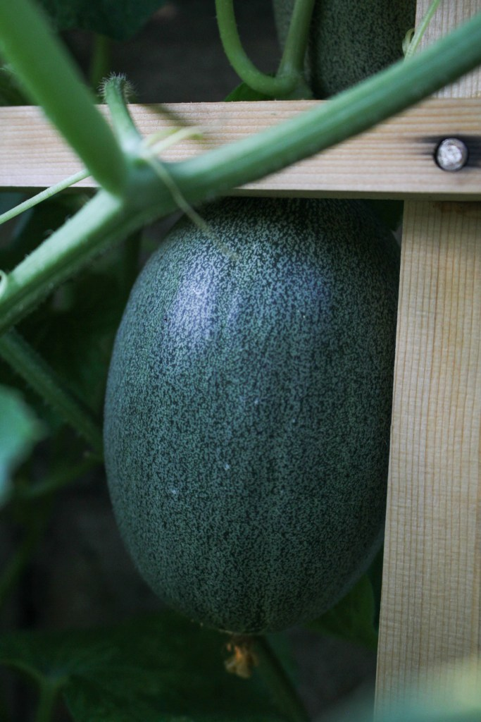 Melon {Katie at the Kitchen Door}