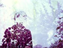 Katie-Burns-flowers0-by-Eric-Miller